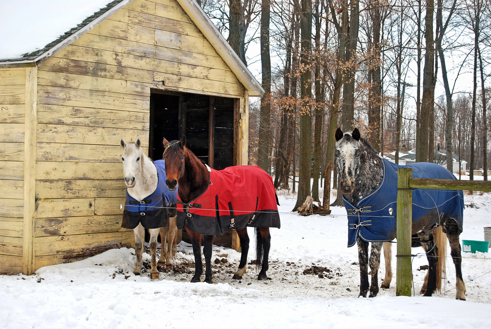 Raise the Bar for Your Equine Laundry