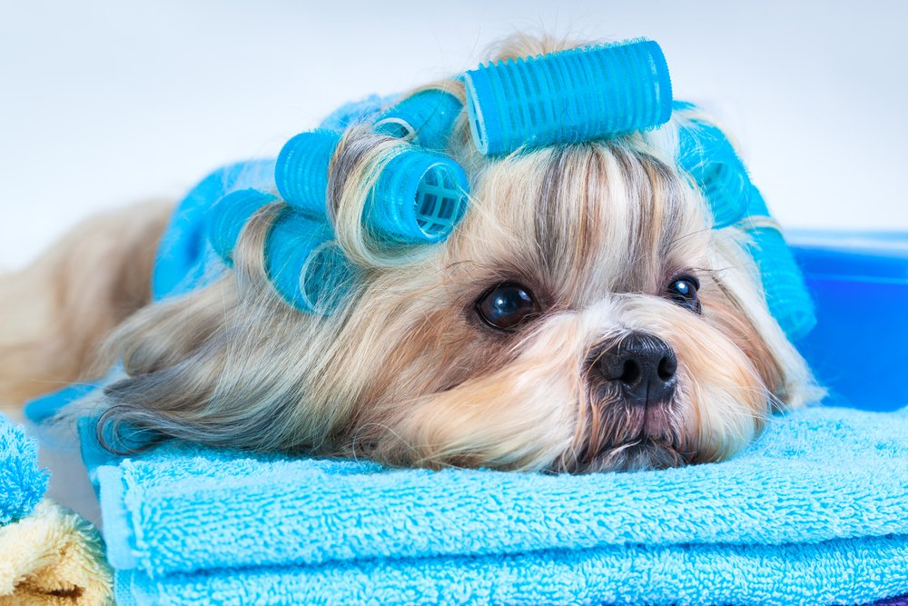 Light commercial laundry services - Dog grooming