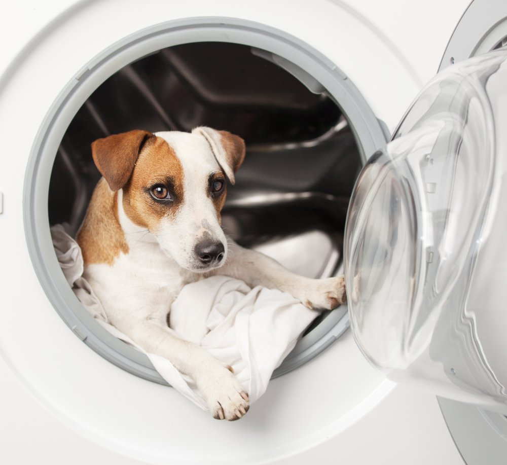 Light Commercial Laundry Services - Pet Groomers